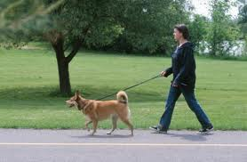 walking a dog